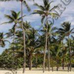 Самостоятельные путешествия, маршруты, отзывыКак дешево долететь до Доминиканы, чартеры в Доминикану